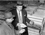 Inspecting fruit in bruce boxes