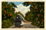 Citrus Postcards038a