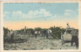 A Lee County grove under cultivation, Ft. Myers, Fla.