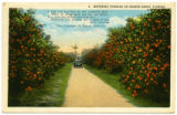 Citrus Postcards045a