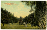 Among the oranges and palmettos, Florida